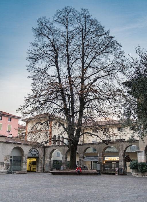 Plaza mit großem Baum