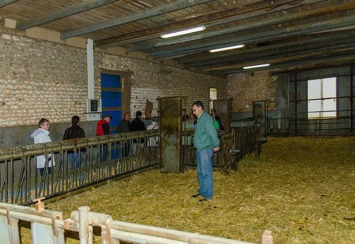 Monsieur Bernard in Gedanken versunken (Besuch einer Ziegenfarm)