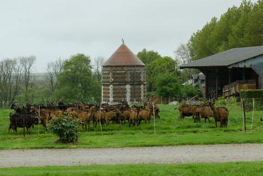 Die Ziegen des Monsieur Bernard (Besuch einer Ziegenfarm)