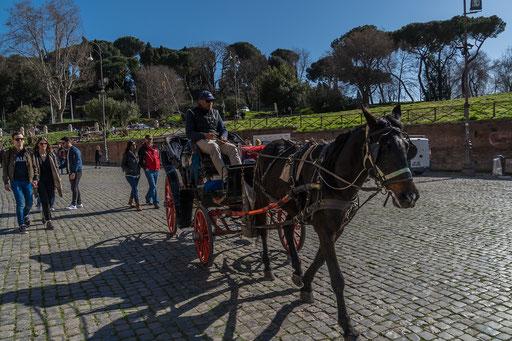 Pferdedroschke am Kolosseum