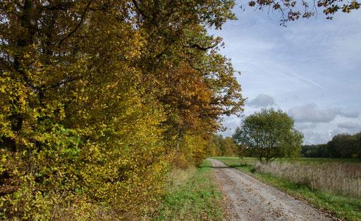 Herbst im Klingholz