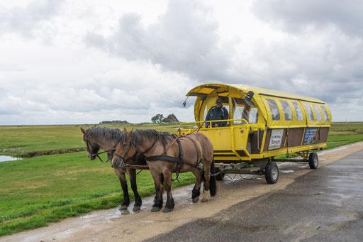Mit den gelben Planwagen erkunden wir die Hallig Hooge