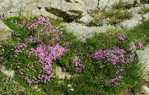 Ja, Hochalpine Blüten