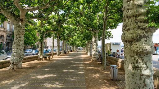 Eine schattige Allee an der Promenade