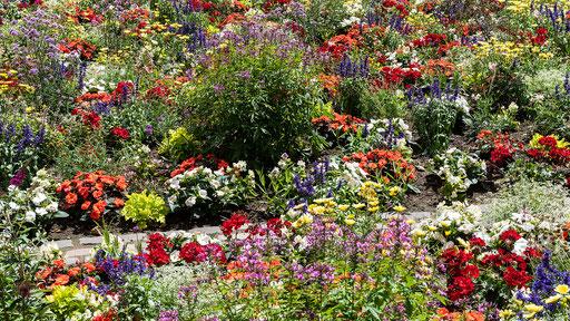 Blumenrabatte am Dom , eine Augenwohltat in der Pflasterwüste