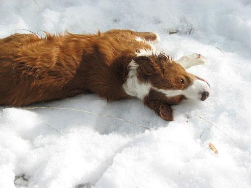 Il adore la neige