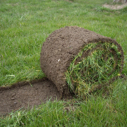 Rasen-Sodenschneider