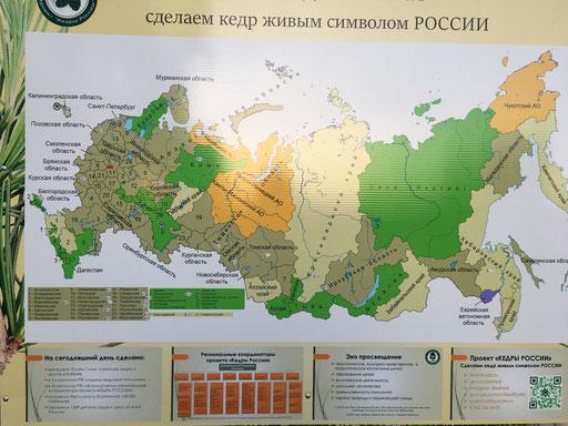 Implantation des pépinières Cèdres de Russie