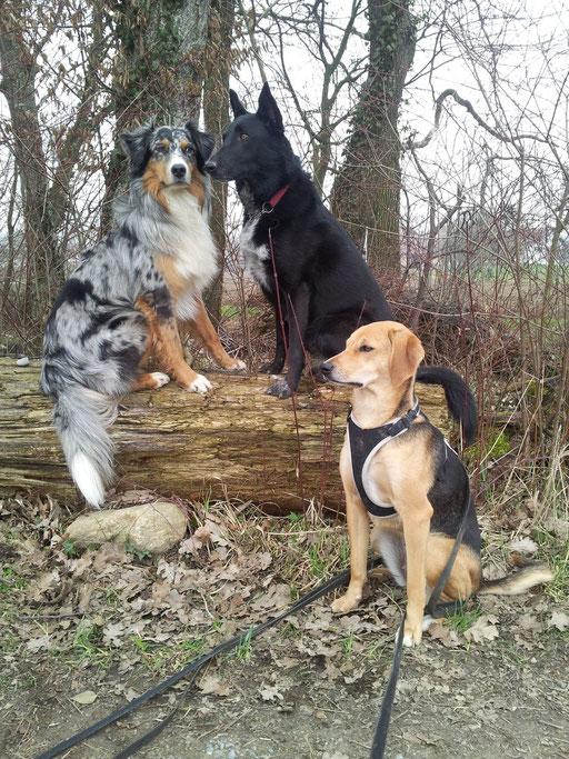 Percey, Lulu und Laika