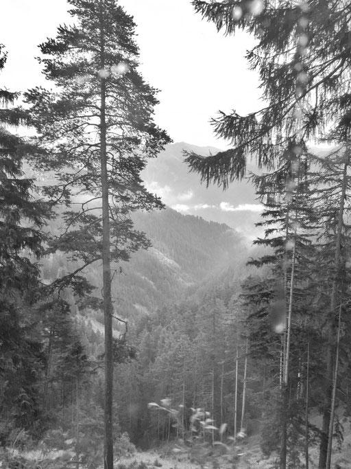 WABI SABI Inspiration Wald im Engadin