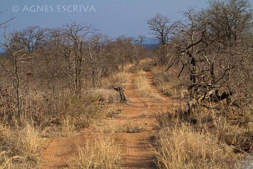 La piste au milieu des mopanes