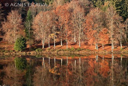 Vernet la Varenne - automne 2010