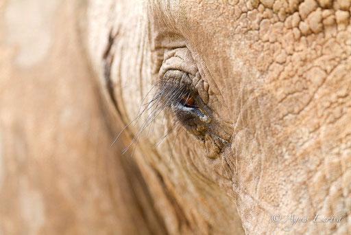 L'oeil de l'éléphant 2
