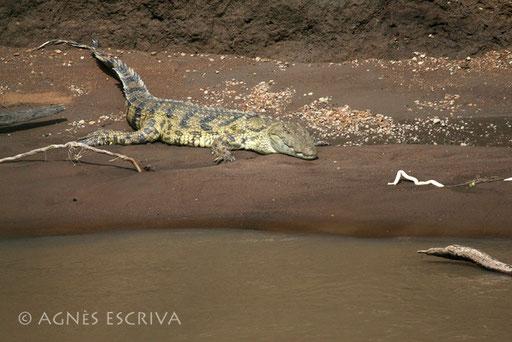 Au bord de la Mara