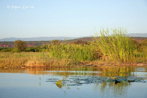 Marécages au bord du lac Baringo