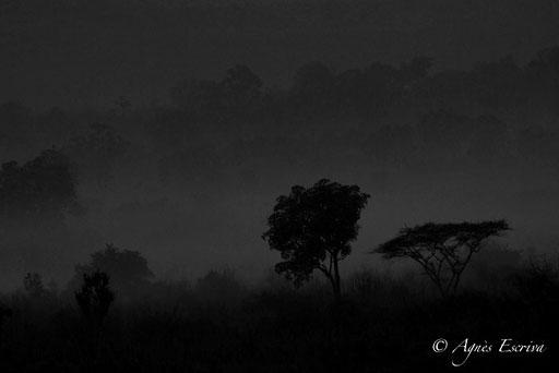 Lever de soleil sur Soysambu N & B