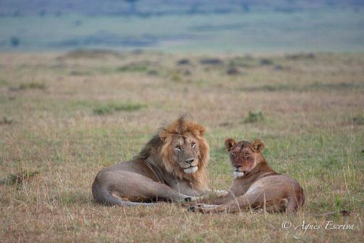 Morani et une jeune lionne du clan