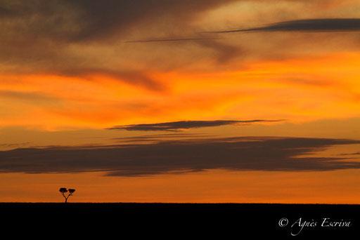 Coucher de soleil sur Mara