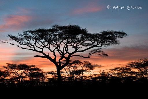 Lever de soleil à Ndutu
