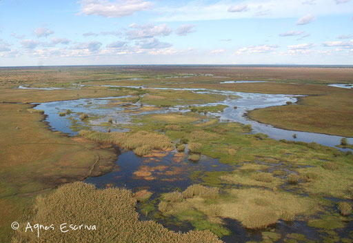 Le marais de Bangweulu