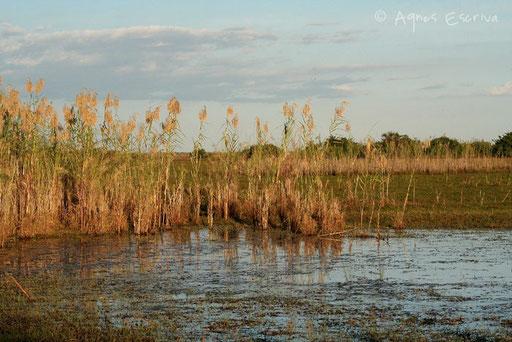 Marais de Bangweulu