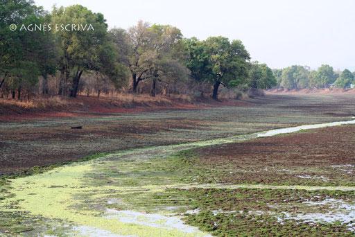 Mfuwe - South Luangwa