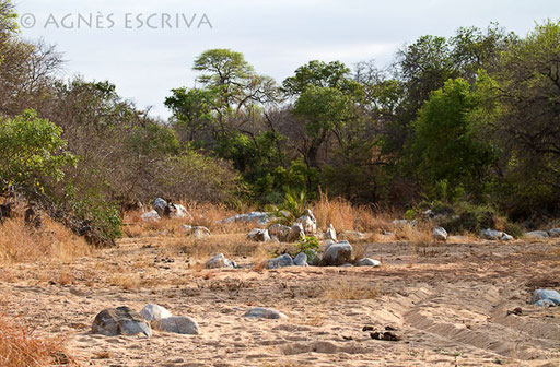 La rivière Sharalumi à sec