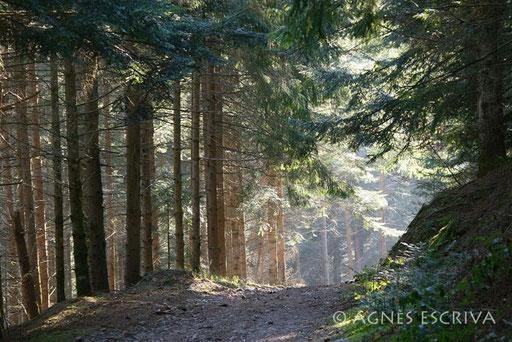 Dans les bois du Boutigou