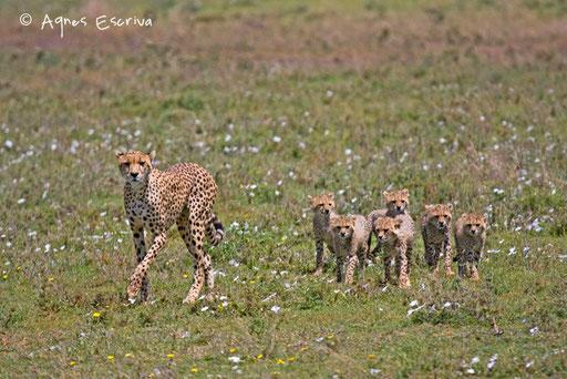 Jeune maman et ses 6 jeunes