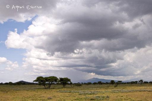 Paysage de Ndutu