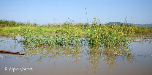 Rives du lac inondées