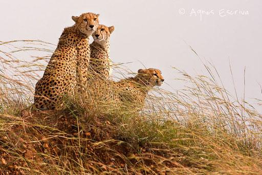 Narasha et ses deux fils