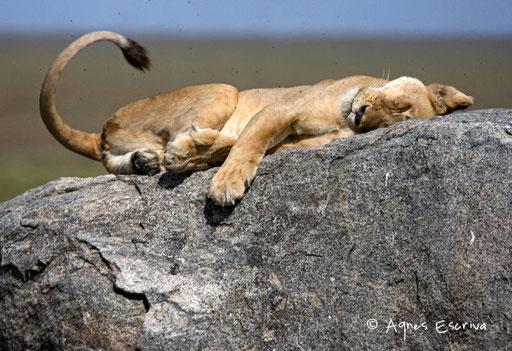 La sieste
