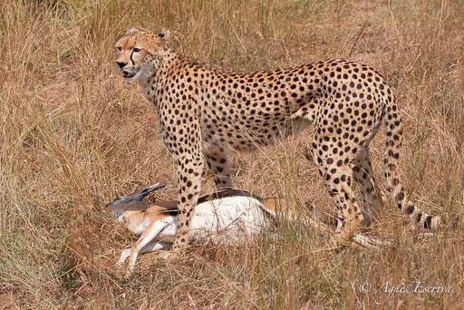 ...Malaïka a attrapé une gazelle