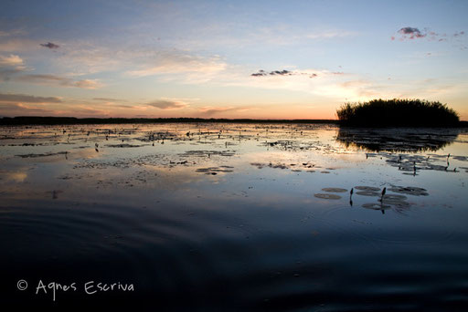 Le marais, le soir 2