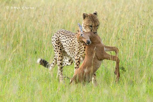 Landy avec bébé topi