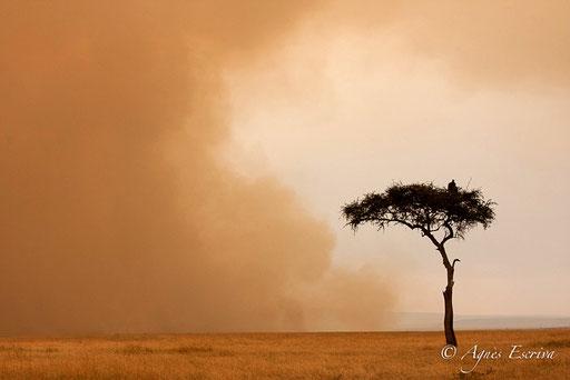 Soleil et feu de brousse