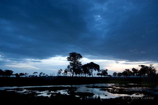 Le marais après la pluie