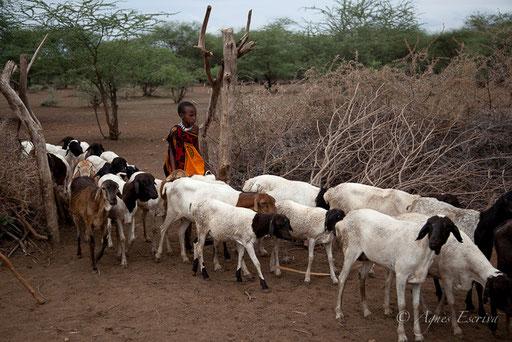 Jeune masaï et troupeau de chèvres