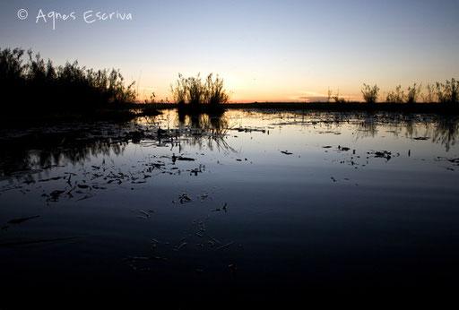 Le marais, le soir 3