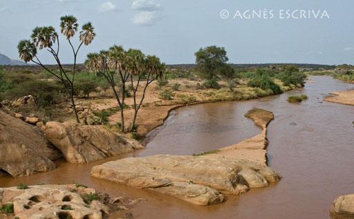 Les gorges de l'Uaso Nyiro
