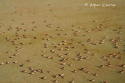 Les plaines inondables de Bangweulu avec cobes lechwe noirs