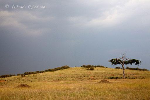 Paysage de Rhino Ridge
