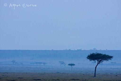 Paysage de savane dans la brume matinale