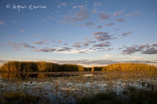 Le marais, le soir