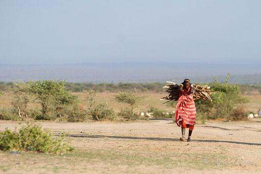 Femme masaï et corvée de bois