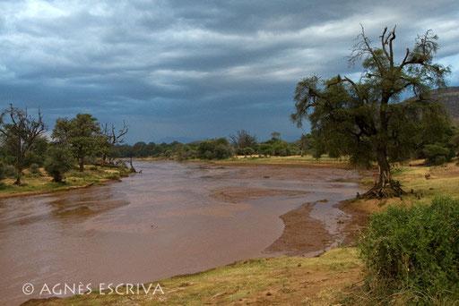 Uaso Nyiro - la rivière aux eaux brunes