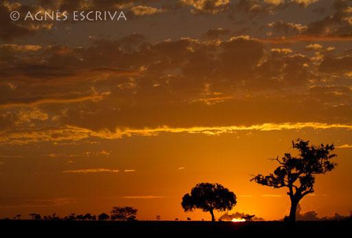 Lever de soleil sur Masaï Mara