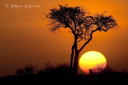 Aurore sur le marais de Musiara