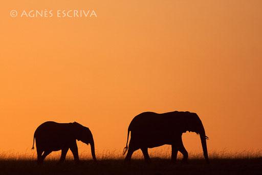 Eléphants en ombre chinoise